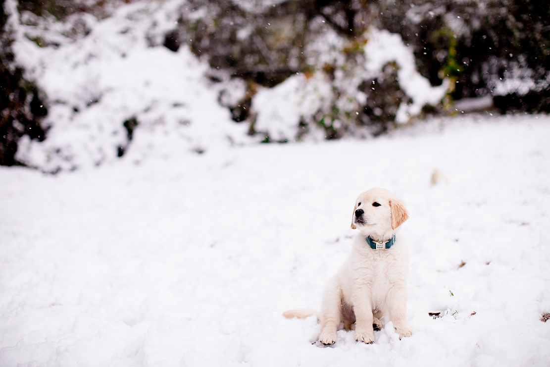 Joeys First Snow Storm - Image Property of www.j-dphoto.com